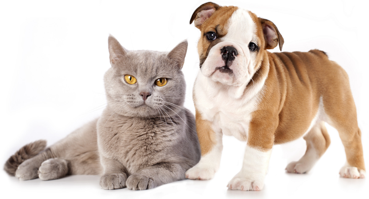 prodotti-veterinaria-torino